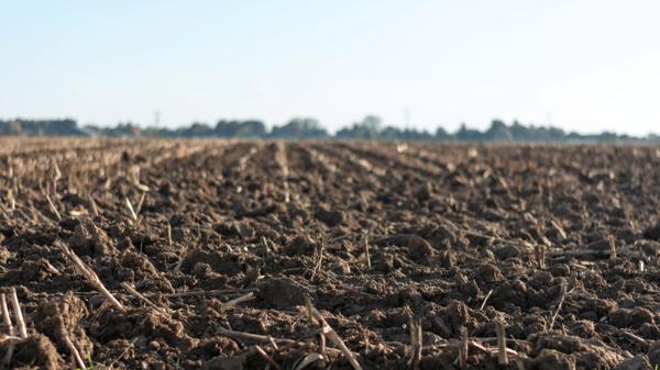 poor fertilizer treatment can reduce soil quality
